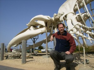 Blue Whale Skeleton in Santa Cruz