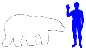 The Polar Bear is the World's Biggest Land Carnivoran