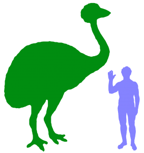 Elephant Bird And Human