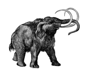 Mammoths Were Perfectly Suited for Cold Weather