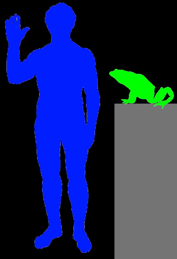 Goliath Frog 171 Big Animals