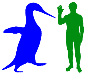 "Anthropornis and Human - Adapted from a sketch by Wikimedia user ""Philip72"""