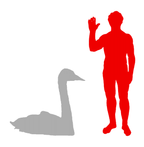 Trumpeter Swan and Human